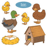 Set of farm animals and objects, vector family duck. Set of cute farm animals and objects, vector family duck, coloring book Stock Image