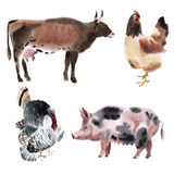 Set of farm animals. Watercolor illustration in white background. Royalty Free Stock Photos