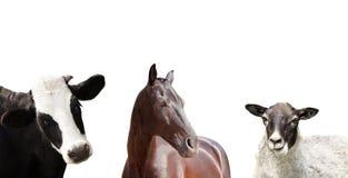 Set of farm animals. On a white background Stock Image