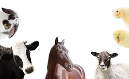 Set of farm animals. On a white background Stock Images
