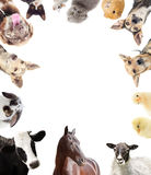 Set of farm animals. On a white background Royalty Free Stock Images