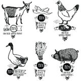 Set Farm Fresh Natural product Chicken Goat Duck Pig Stock Photos