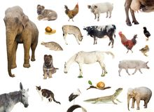 Set of farm and wild animals Stock Image
