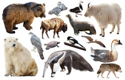 Set of fauna of North American animals. Stock Photography
