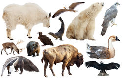 Set of fauna of North American animals. Royalty Free Stock Photography