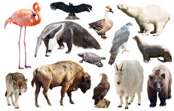 Set of fauna of North American animals. Stock Image