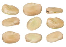 Set fava bean, broad bean, butter bean, Windsor bean, horse bean isolated on white Royalty Free Stock Images