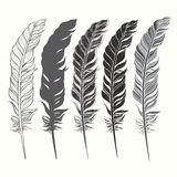 Set of feather isolated on white background. Hand drawn  i Stock Photos