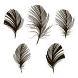 Set of  feather silhouettes on a white background. Hand-drawn ve Royalty Free Stock Photo