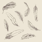 Set of feather Royalty Free Stock Image