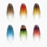 Set of Feathers Isolated Stock Image