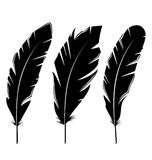 Set feathers isolated on white background Royalty Free Stock Photos