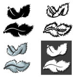 Set of Feathers types with different concept Royalty Free Stock Image