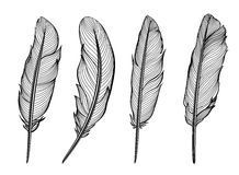 Set of  feathers. Vector Stock Images