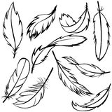 Set of feathers Stock Images
