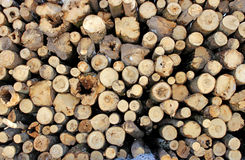 Set of felled logs Stock Photos