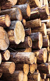Set of felled logs Royalty Free Stock Image