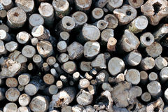 Set of felled logs Royalty Free Stock Images