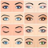 Set of female eyes and brows image with Stock Image