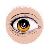 Set of female eyes Stock Image