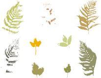 Set of fern and autumn leaves Gung style Vector illustration.  Royalty Free Stock Image