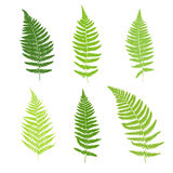Set of fern frond silhouettes. Vector illustration Stock Photography