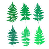 Set of fern frond silhouettes. Vector illustration Stock Photos