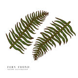 Set of fern frond silhouettes. Vector illustration Royalty Free Stock Photography