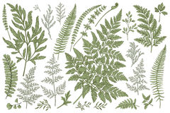 Set of fern leaves. Royalty Free Stock Image