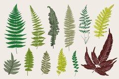Set Ferns. 12 Leaves. Vintage vector botanical illustration. Colorful Royalty Free Stock Image