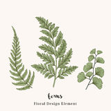 Set with ferns. royalty free illustration
