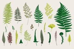 Set Ferns. Vintage vector botanical illustration. Colorful Stock Photo
