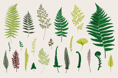 Set Ferns. Stock Photo