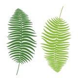 Set Ferns. Vintage vector botanical illustration. Colorful. Vector. illustration EPS Royalty Free Stock Image