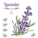 Set festive border and elements with Lavender flowers for greeting card. Botanical illustration. Stock Images