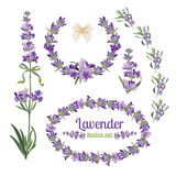 Set festive frames and elements with Lavender flowers for greeting card. Botanical illustration. Stock Photo