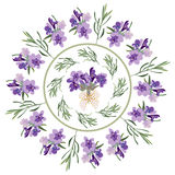 Set festive frames and elements with Lavender flowers for greeting card. Botanical illustration. Royalty Free Stock Images