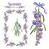 Set festive frames and elements with Lavender flowers for greeting card. Botanical illustration. Royalty Free Stock Photography