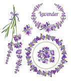 Set festive frames and elements with Lavender flowers for greeting card. Botanical illustration. Stock Images