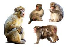 Set few makaki nad białym tłem Obrazy Stock