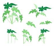 Set filodendronów liście na Białym tle ilustracja wektor