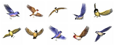 Set of finch birds - 3D render. Colorful finch birds in white background. Eastern blue finch bird, Florida Jay finch bird, gold finch bird, Parsons finch and Royalty Free Stock Images