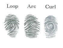Set of fingerprints icons, id security identity fingerprint. Loop, arc, curl Stock Photos