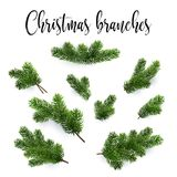 Set of fir branches. Christmas tree, pine, conifer Stock Photos