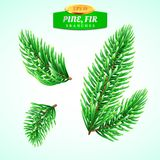 Set of fir branches, Christmas tree, pine tree. Symbol of Christmas and New Year. Decorations for winter holidays. Detailed realistic 3d illustration Stock Photography