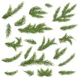 Set of Fir Branches. Christmas Tree. Vector Illustration Stock Photography