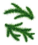Set of fir branches. Christmas tree. Vector illustration isolated on white background. Symbol of  New Year Royalty Free Stock Photo