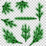 Set of fir branches. Christmas tree branches on transparent background. eps10 vector illustration