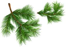 Set of Fir Branches stock illustration