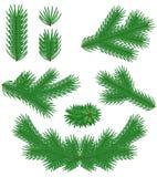 Set fir branches. Set green Christmas fir branches Stock Image